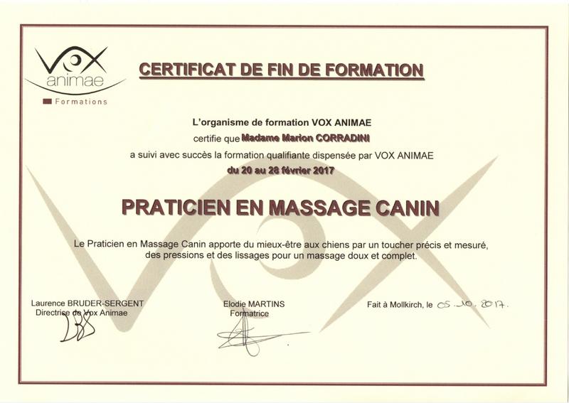 Diplome praticienne en massage canin