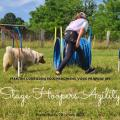 Stage hoopers agility